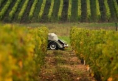 Pierre et Bertrand Couly - Chinon vineyard, France.